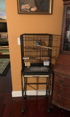 Bird with cage for Sale in Sunrise, FL