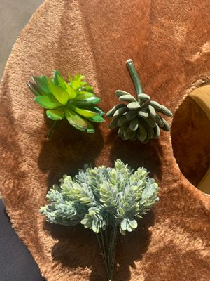Baby succulents for Sale in Fontana, CA