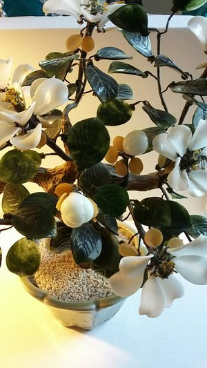 Chinese jewel bonsai for Sale in Seattle, WA
