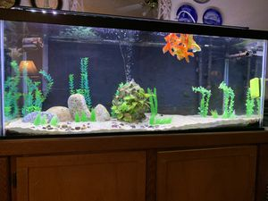 75 gallon aquarium with Stand for Sale in Los Angeles, CA