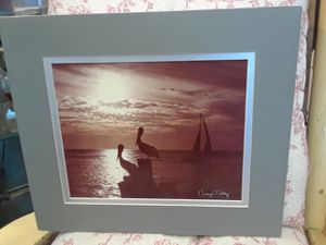 "12 x14"" signed photography of pelicans for Sale in Ruskin, FL"