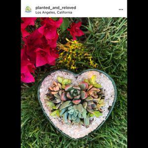 Valentines Succulent Arrangement for Sale in Arcadia, CA