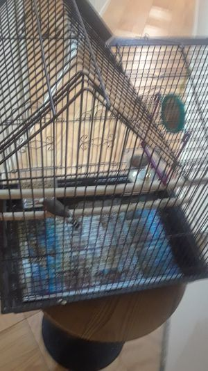 Bird cage with 2 finch birds(.fully equipped) for Sale in The Bronx, NY