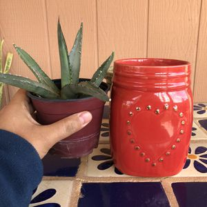 Succulent Agave Plant Gift Set Blue Glow with Pot for Sale in Chandler, AZ