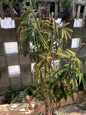 Free plants for Sale in Santa Monica, CA