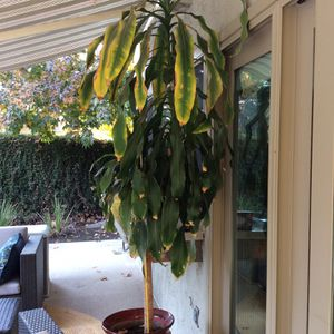 Plant, House With Pot for Sale in Bakersfield, CA