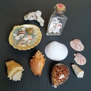 Seashells and decorations for Sale in Mesa, AZ