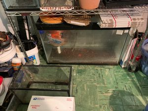 Lot of fish tank need be gone soon moving out for Sale in Washington, DC