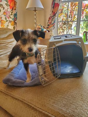 Petmate Kennel Cab Carrier and pad for Sale in Palm Harbor, FL