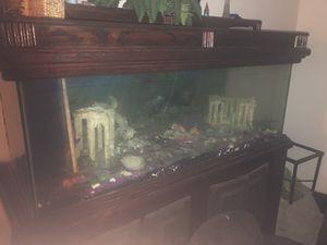 300 Gallon Fish Tank for Sale in Missouri City, TX