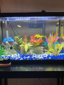 10 Gallon Fish Tank for Sale in Indian Trail,  NC