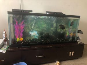 2 OSCARS AND A SUCKER FISH AND THE FISH TANK 55 GALLON for Sale in Millersville, MD