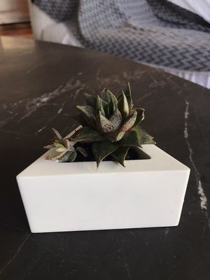 concrete planter w/ succulents for Sale in San Francisco, CA