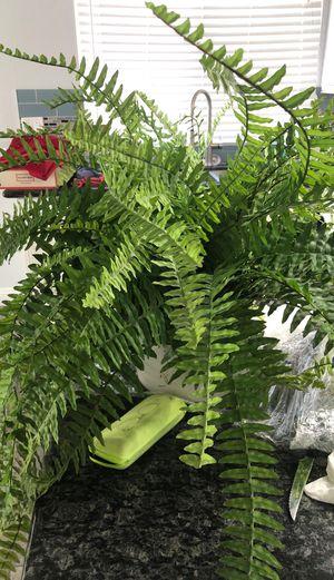 3 fake plants for Sale in Corona, CA