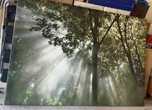Canvas print of Trees in Sunlight for Sale in Carlsbad, CA