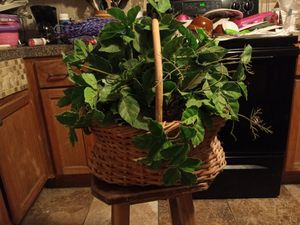 Basket with artificial plant for Sale in Fort Worth, TX
