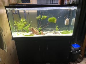 60 gallon fish tank for Sale in St. Petersburg, FL