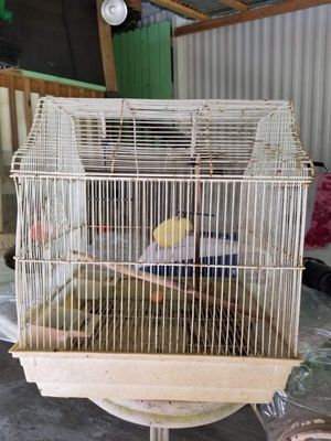 2 bird cages for Sale in Raleigh, NC