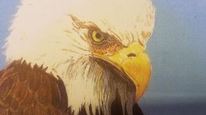 Bald Eagle Pencil Portrait for Sale for sale  Oxnard, CA