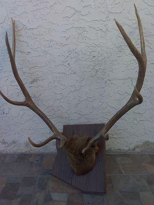 Large elk rack on Arizona state shaped plaque for Sale in Apache Junction, AZ