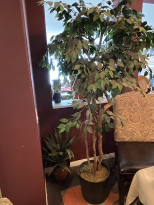 Fake plant. 8ft. $45 for Sale in Norco, CA