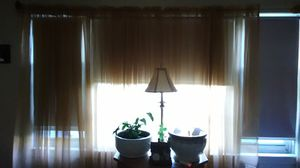 Pumpkin colored curtains 8 panels perfect condition nice sheer for Sale in Bridgewater, MA