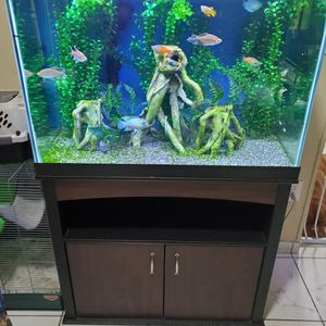 65 Aquarium for Sale in Miami, FL