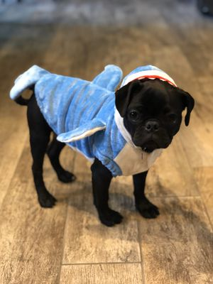 Shark Costume for Dog S for Sale in San Jose, CA