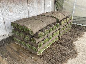Washington Sod & Turf - Fresh Cut Pallets of Sod - Free Delivery! for Sale in Everett, WA