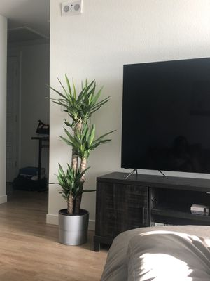 Plant / Tree for Sale in Henderson, NV