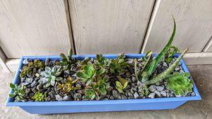 Succulent Arrangement for Sale in Clovis, CA