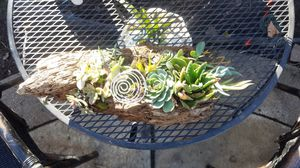 Handcrafted driftwood flower pot with 6 succulents for Sale in Lodi, CA