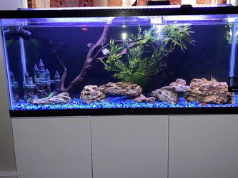 60 Gallon Tank An Stand An Accessories for Sale in Columbus,  OH