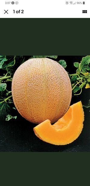 CANTALOUPE ORGANIC SEEDS 10 LEFT for Sale in Fort Lauderdale, FL