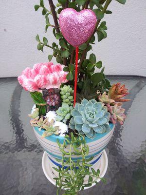 Succulents en maceta de cerámica chica for Sale in South Gate, CA