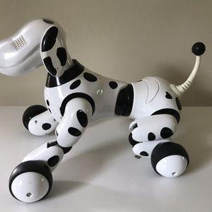 Zoomer Dog for Sale in Virginia Beach, VA