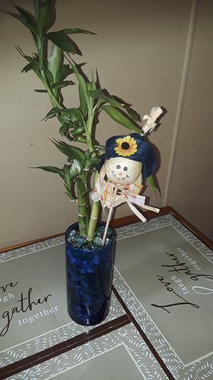 Bamboo plant for Sale in Lemoyne, PA