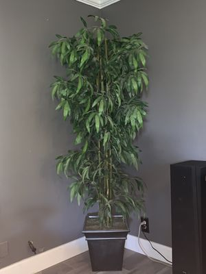Indoor house plant 🌱 for Sale in Santa Ana, CA