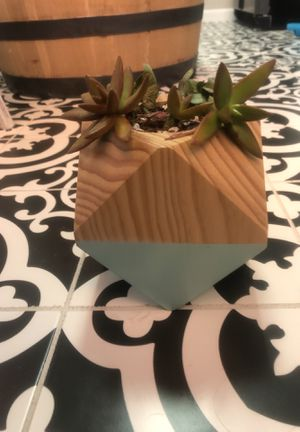 Mint/Sea-foam Geometric succulent planter with plants for Sale in Colorado Springs, CO