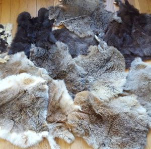Lot of rabbit pelt furs for Sale in Tacoma, WA