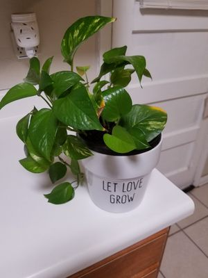 Real Photos vine with vase for Sale in El Paso, TX