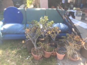 Plants in for Sale in Los Angeles, CA