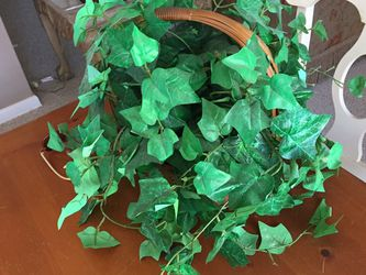 Fake Evy Plant for Sale in Fort Myers Beach,  FL