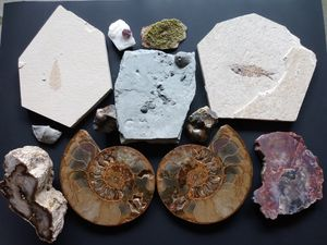 Rock Collection, Fossils, Minerals, Crystals, Petrified wood, Indian Artifacts for Sale in Portland, OR