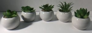 Mini Artificial Succulents in Ball or Watering Can Pots for Sale in Pembroke Pines, FL