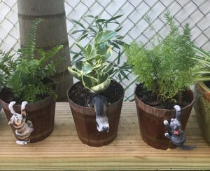 3 Charming Cat Pots 3 Plant Varieties for Sale in Kissimmee, FL