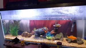 Fish tank with everything included for Sale in San Antonio, TX