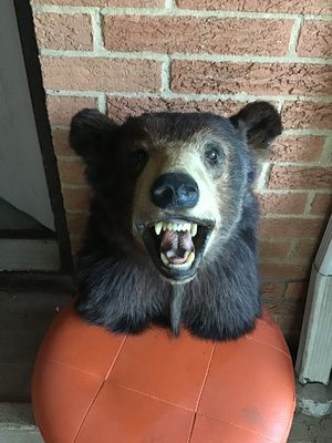 real dear and bear wall decoration for Sale in North Royalton, OH