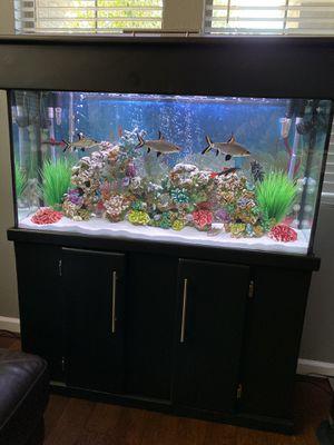 Beautiful 65 Gallon Freshwater Aquarium for Sale in Phoenix, AZ