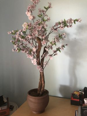 3 foot tall Japanese cherry blossom tree for Sale in Apopka, FL